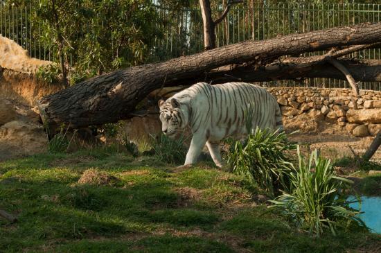 La destrucción del hábitat y su impacto en la biodiversidad.