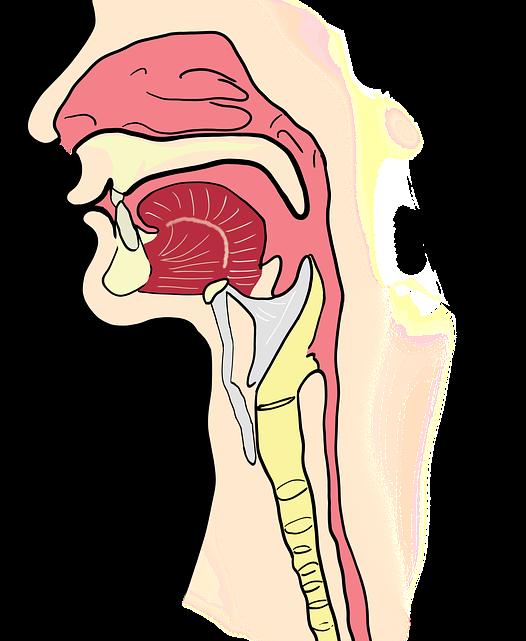 Curiosidades sobre la boca humana