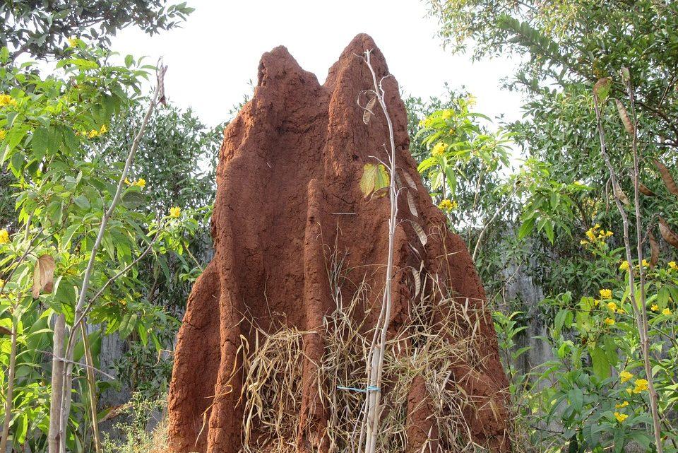 Como controlar y exterminar las termitas