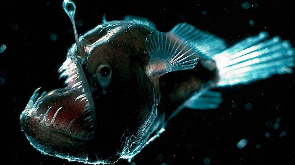 3 Terroríficas criaturas que viven en el fondo del mar