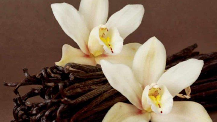 Los usos medicinales de la vainilla