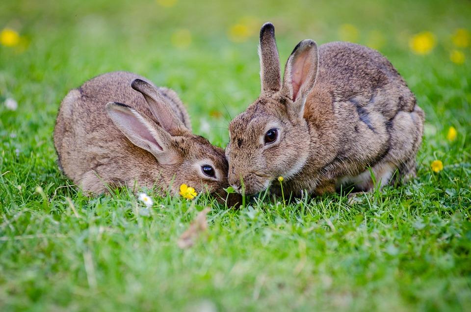 ¿Cuál es la Isla de los conejos?