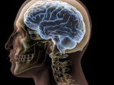 La forma del cerebro y los rasgos de la personalidad