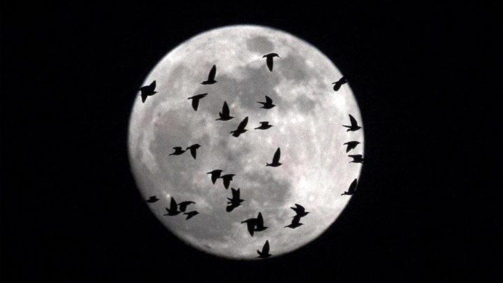 ¿Qué ocurriría si no existiera la Luna?