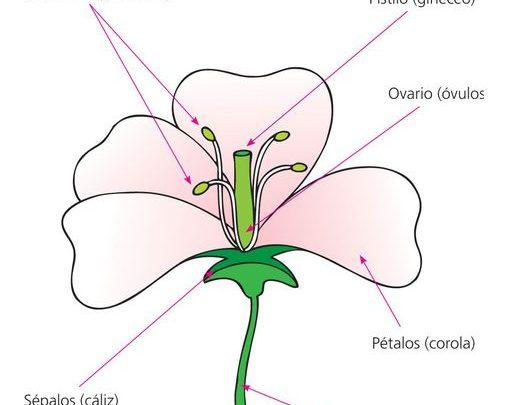 Todo lo que debes saber sobre la flor