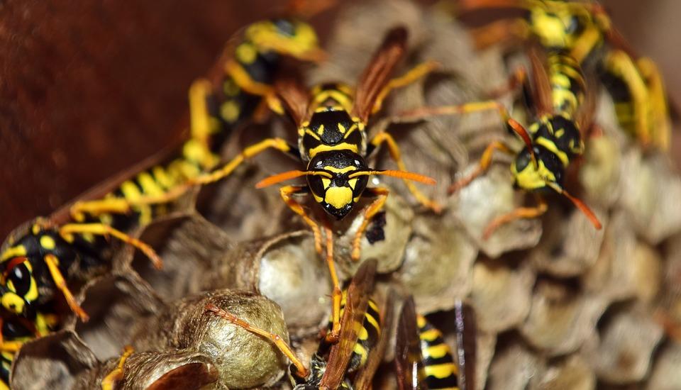 ¿Es peligrosa una picadura de avispas?