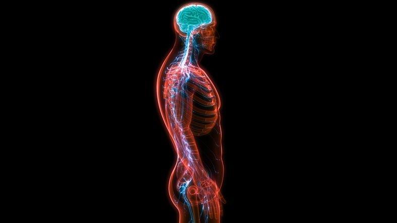 El sistema nervioso humano y su funcionamiento